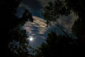 Amazon Rainforest Stars Moon Rainbow Paititi Institute Iquitos Peru Greg Goodman AdventuresofaGoodMan 272x182